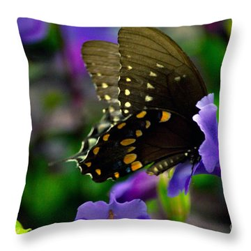 Black Swallowtail Throw Pillow