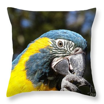 Throw Pillow featuring the photograph Blue Throat Macaw by Melissa Messick