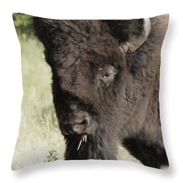 Buffalo Painterly Throw Pillow by Ernie Echols