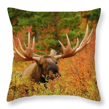 Untamed Throw Pillows