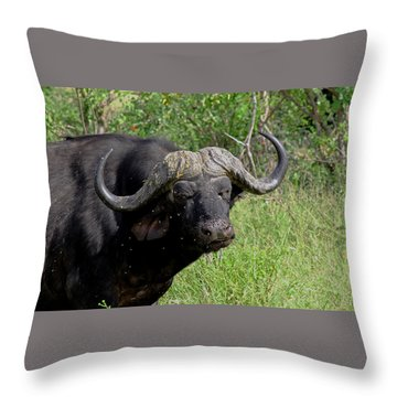 Cape Buffalo Throw Pillow