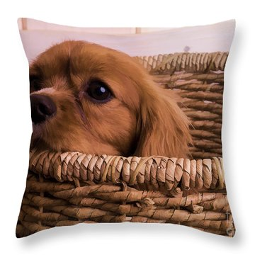 Cavalier King Charles Spaniel Puppy In Basket Throw Pillow by Edward Fielding