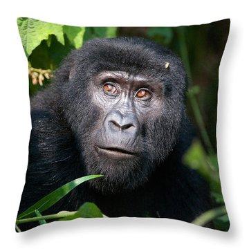 Close-up Of A Mountain Gorilla Gorilla Throw Pillow