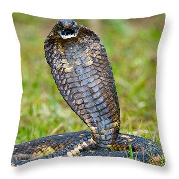 Close-up Of An Egyptian Cobra Heloderma Throw Pillow