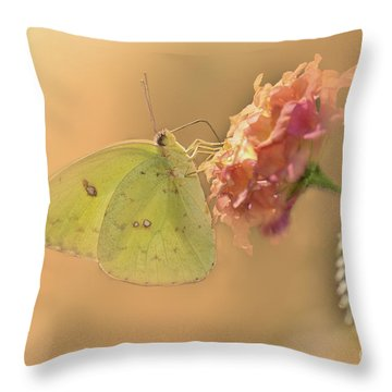 Clouded Sulphur Butterfly Throw Pillow by Betty LaRue