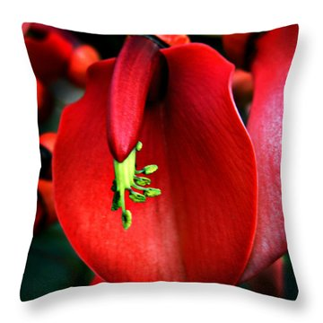 Cockspur Coral Tree Throw Pillow by William Tanneberger