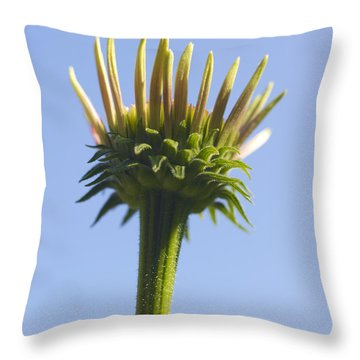 Cornflower Throw Pillow by Tony Cordoza