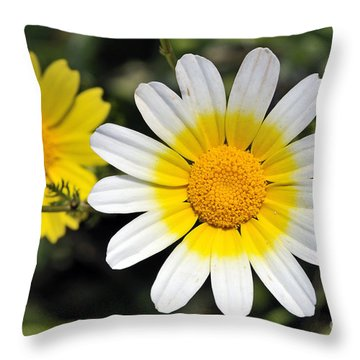 Throw Pillow featuring the photograph Crown Daisy Flower by George Atsametakis