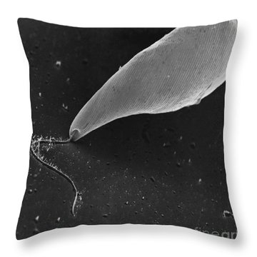 Euglena Sem Throw Pillow by David M. Phillips / The Population Council