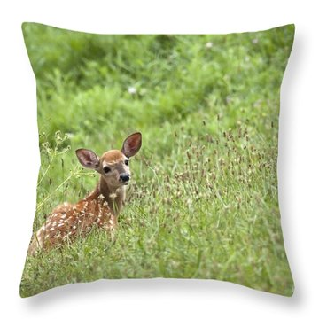 Fawn Throw Pillow by Jeannette Hunt