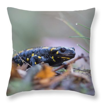 Fire Salamander - Salamandra Salamandra Throw Pillow