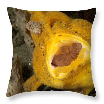 Frogfish With Large Lure, Open Mouth Throw Pillow by Steve Jones