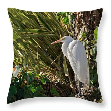 Throw Pillow featuring the photograph Great Egret by Kate Brown