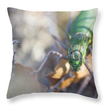 Green Grasshopper Ephippiger Throw Pillow by Jivko Nakev