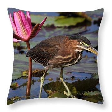 Green Heron Photo Throw Pillow