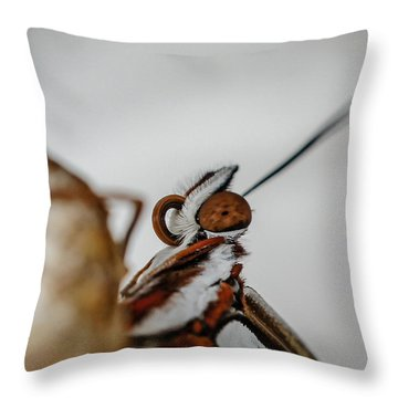 Throw Pillow featuring the photograph Here's Looking At You by TK Goforth