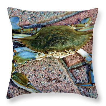Throw Pillow featuring the photograph Hudson River Crab by Lilliana Mendez