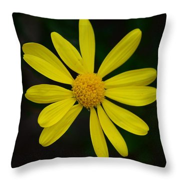 Isolated Daisy Throw Pillow by Debra Martz