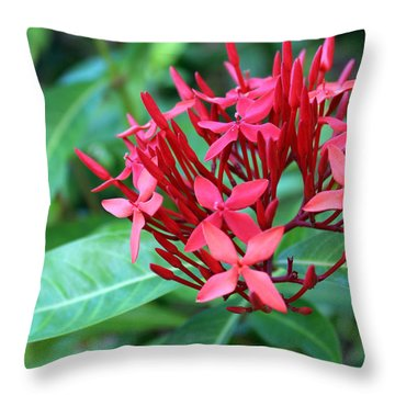 Jamaican Red Throw Pillow