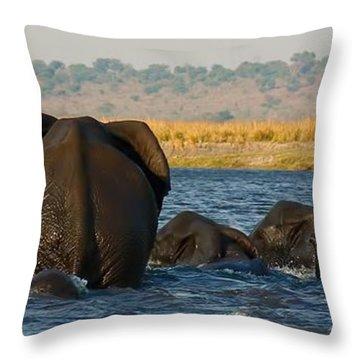Throw Pillow featuring the photograph Kalahari Elephants Crossing Chobe River by Amanda Stadther
