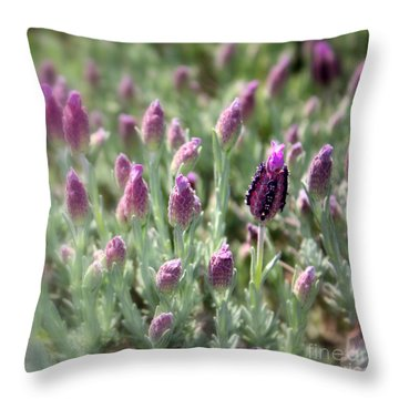 Lavender Standout Throw Pillow by Carol Groenen