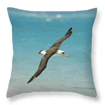 Laysan Albatross Flying Midway Atoll Throw Pillow by Tui De Roy