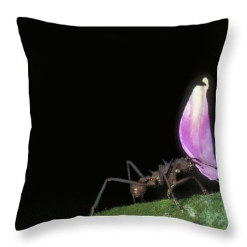 Leafcutter Ant Throw Pillow by Gregory G. Dimijian