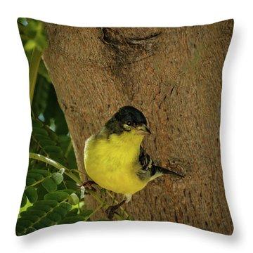 Lesser Goldfinch Throw Pillow