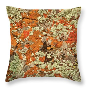 Throw Pillow featuring the photograph Lichen Abstract by Mae Wertz