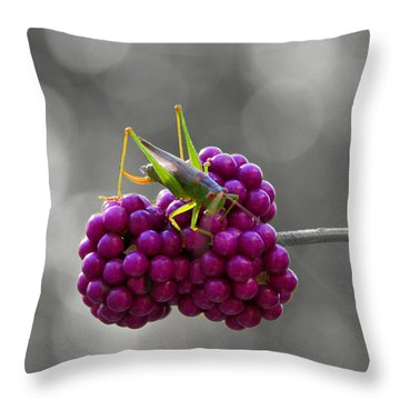 Lunch Time Throw Pillow by Linda Segerson