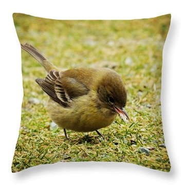 Throw Pillow featuring the photograph Lunch Time by Zinvolle Art