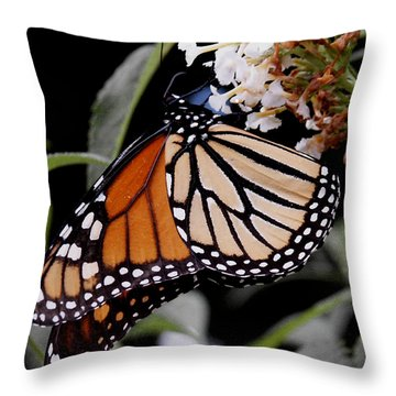 Monarch Butterfly Throw Pillow by James C Thomas