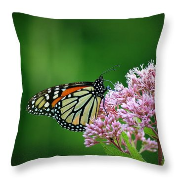 Monarch In Light  Throw Pillow