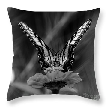 Nature Looking Glass  Throw Pillow