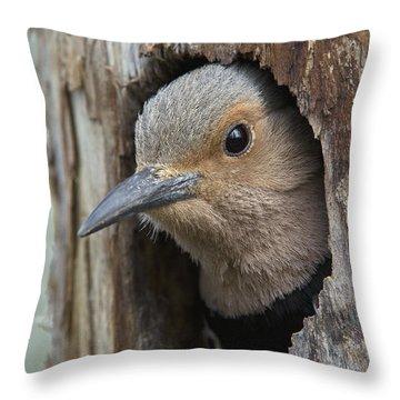 Northern Flicker In Nest Cavity Alaska Throw Pillow