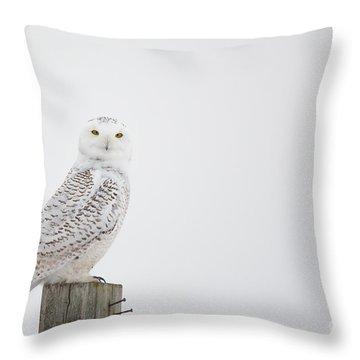 Observant Throw Pillow