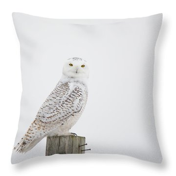 Observant Throw Pillow by Cheryl Baxter