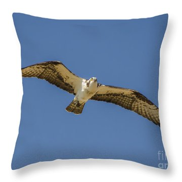 Osprey In Flight Spreading His Wings Throw Pillow by Dale Powell