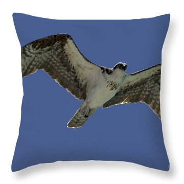 Throw Pillow featuring the photograph Osprey In Flight Photo by Meg Rousher