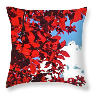 Plum Tree Cloudy Blue Sky 3 Throw Pillow by CML Brown