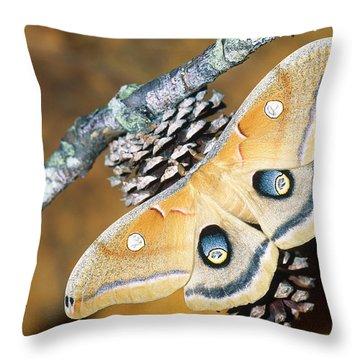 Pterygota Throw Pillows