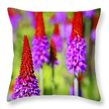 Primula Vialli Throw Pillow