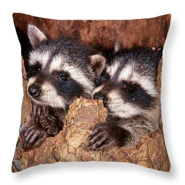 Raccoons Throw Pillow
