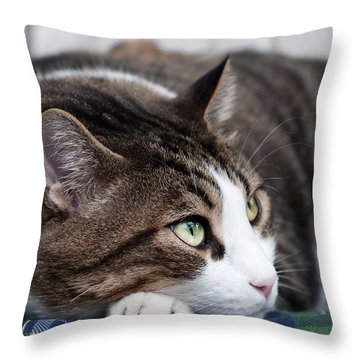 Throw Pillow featuring the photograph Relax by Laura Melis