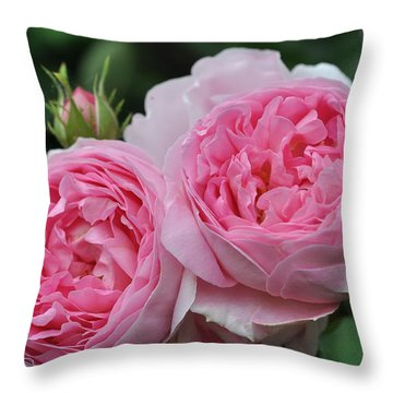 Throw Pillow featuring the photograph Rose Constance Spry by Sabine Edrissi
