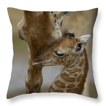 Throw Pillow featuring the photograph Rothschild Giraffe And Calf by San Diego Zoo