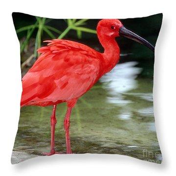 Scarlet Ibis Throw Pillow by Millard H Sharp