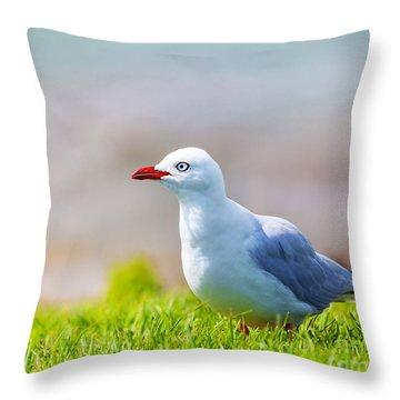 Seagull Throw Pillow by MotHaiBaPhoto Prints