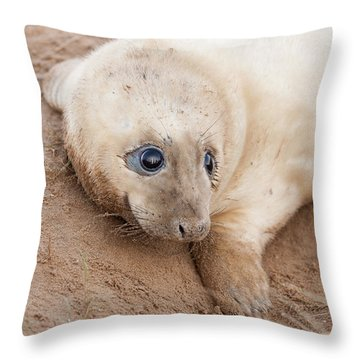 Seal Pup Throw Pillow