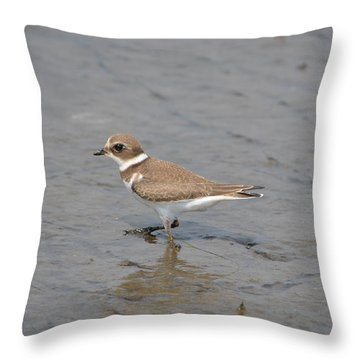 Throw Pillow featuring the photograph Semipalmated Plover by James Petersen